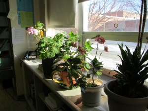 Plants behind James' desk.