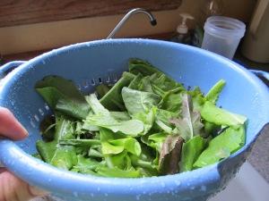 Colander with lettuce.