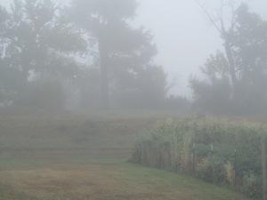 Mists around the garden.