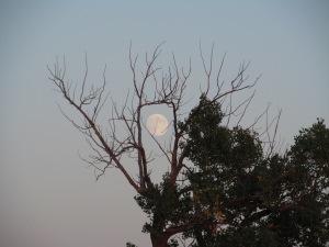 A full moon rising.