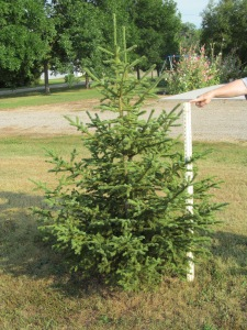 Tree three, a bit taller.