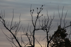 Birds congregating at sunrise.