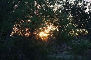 More sunrise through the trees.