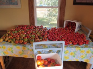 The tomatoes set out to ripen. There are two more pails in the basement and lots more to pick.