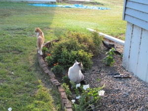 Sophia and Roger enjoying the morning in the flowers.