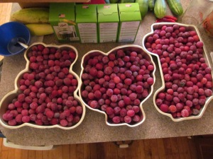Plums waiting to be made into jelly. As you can see, I am out of containers to hold things.