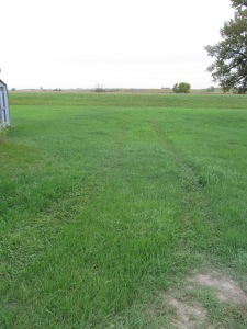 Lines of wheel tracks in the grass, oh who was driving here?