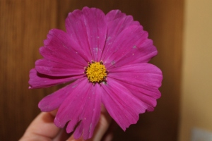 Random cosmos to add pink to the post.