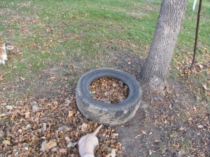 Tire full of compost.
