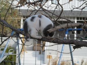 Neighbor kitten in the tree above us, supervising I think.
