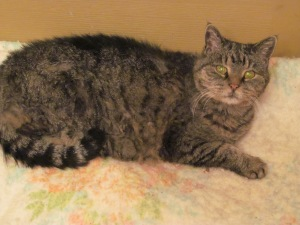 Tigee loves the blanket in front of the door.