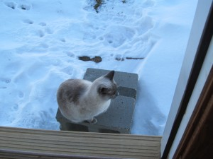 Roger wouldn't get off the step. She must not like the feel of the snow on her toes.