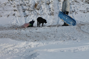 Audrey (the dog) appears to be protecting Jaxon as he sleds down the hill while Paulina looks on.