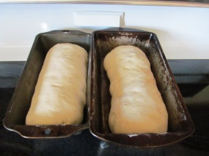 Loaves rolled and ready to bake.