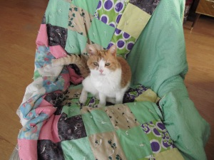 Sophia getting ready to settle on the quilt on the rocking chair.