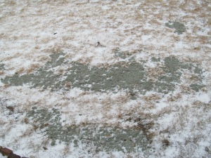 Snow fell on the grass seed.