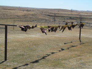 Uniform tops on the line. It was windier than I thought when I went to hang them.