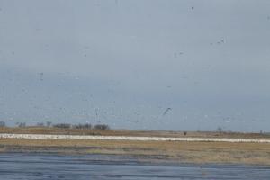 More birds.