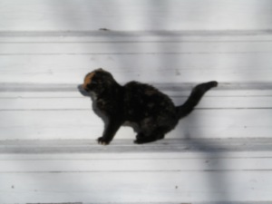 The neighbor cat was sunning on our porch steps until something scared her.