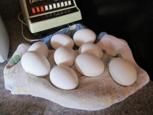 Almost time for Easter Egg dyes.