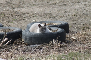 Roger in the tire.