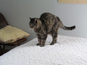 Tigee stretching after she was caught sleeping on the bed I need to make up for Jess and Tony tonight.