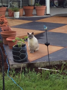 Roger poses by the turtle planter.