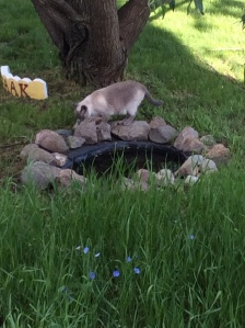 Roger checking out the little pond.