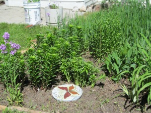 Lily garden is clean, and I found a home for the stepping stone Alvina gave me.