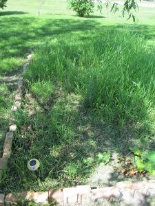 Daisy area has a start on weeding.