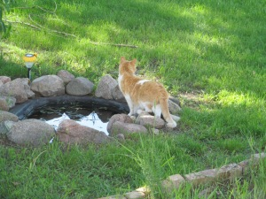Sophia at the pond, like a big cat checking for trouble when she heard a noise.