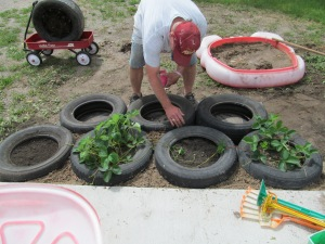 James packing the last of the tires into place for the rest of the new strawberry setup.