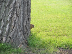 This squirrel was playing peek-a-boo as Paulina and I walked by his tree.