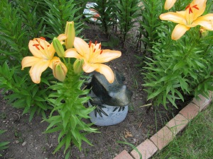 Close up of some peach colored lilies. Big frog loves his spot.