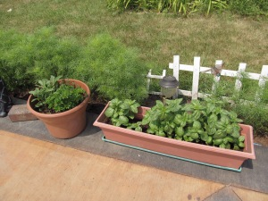 The herbs are growing nicely.