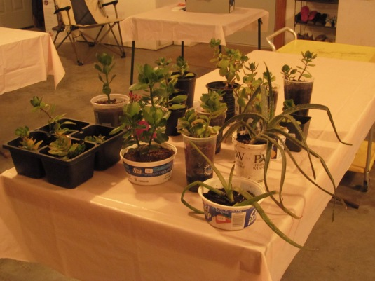 All these plants are with new owners and a life-time guarantee for a replacement if it dies.