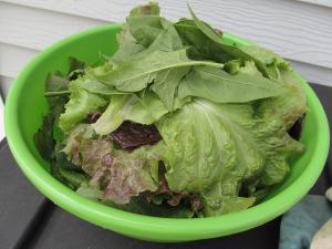 Bowl of fresh lettuce