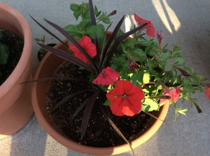 Red petunias with brown spike plant. I love how these colors work.