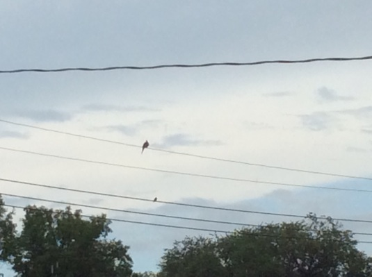 Birds were silent on the wires this morning.