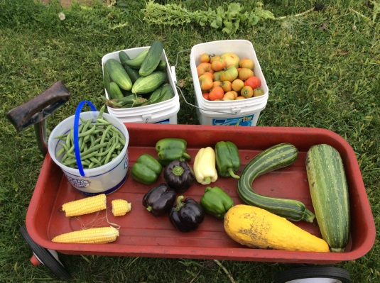 Harvest from today.