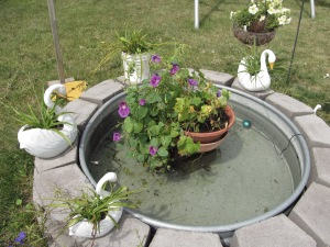 Geranium and morning glory plants in the pond