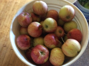 Five-gallon pail of apples