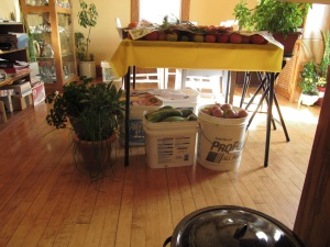Plants inside and buckets that need to be unpacked, I did that later on Saturday.