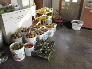 Produce in the pails this morning.