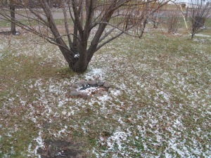 Snow under the willow tree.