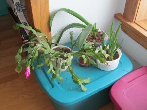 Plants in bloom.