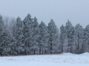 Trees east of Hazelton School.