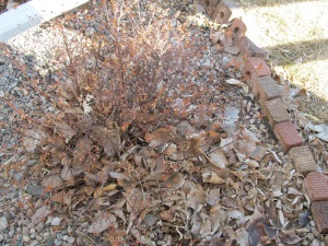 Work for this week will be getting some of the leaves out of the flower beds.