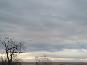Some geese shown in the distance.
