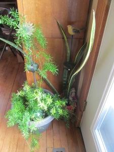 Asparagus Fern loves the east door area.
